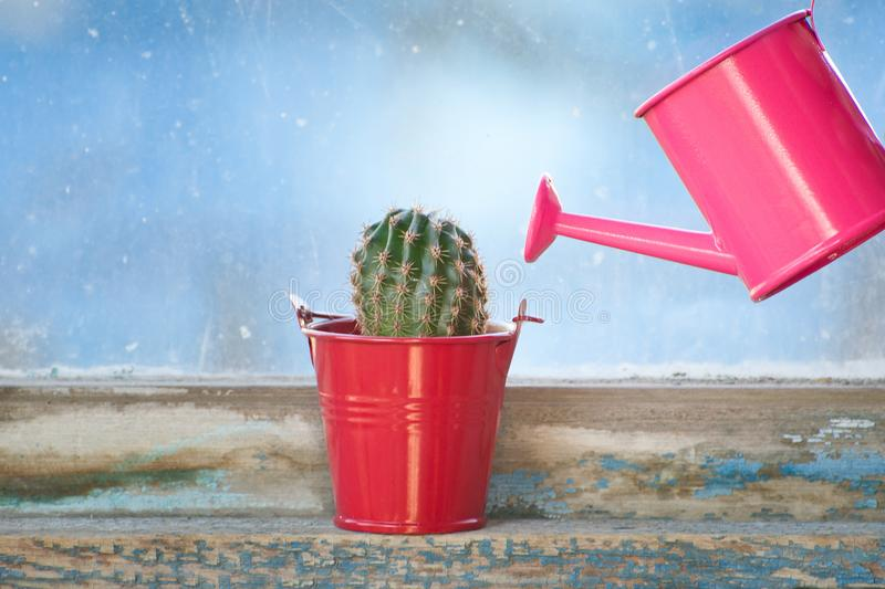 Small pink watering can and cactus on the old window royalty free stock images