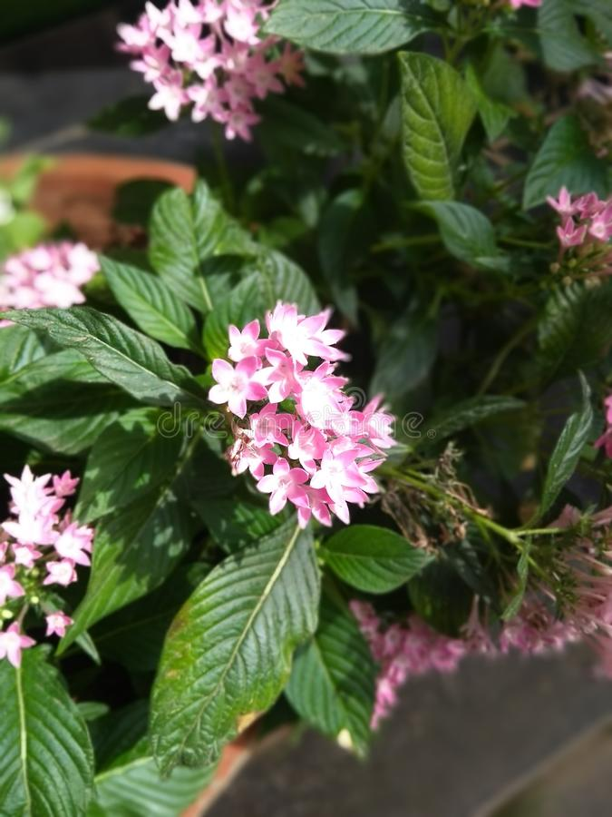 Small pink and white flowers stock photography