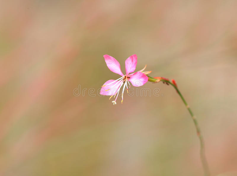 Small pink wild flower stock image