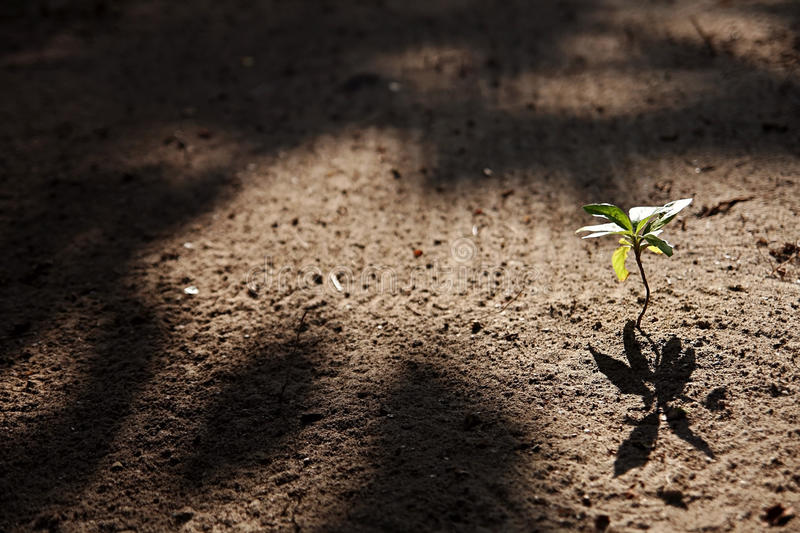 Download A small plant stock photo. Image of earths, maintains - 24234386