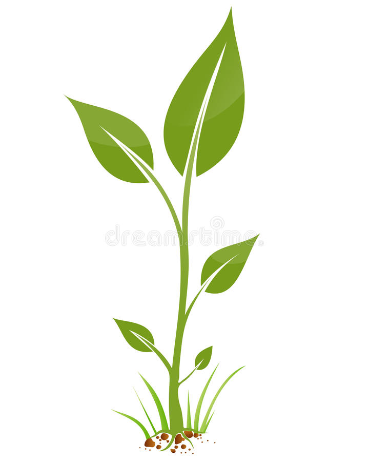 Download Small  plant stock vector. Image of environment, biologic - 26138864
