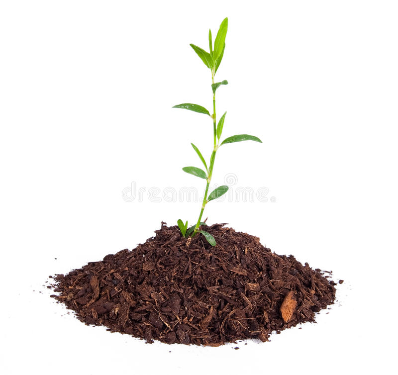 Download Small plant stock photo. Image of banking, creative, grass - 29683480