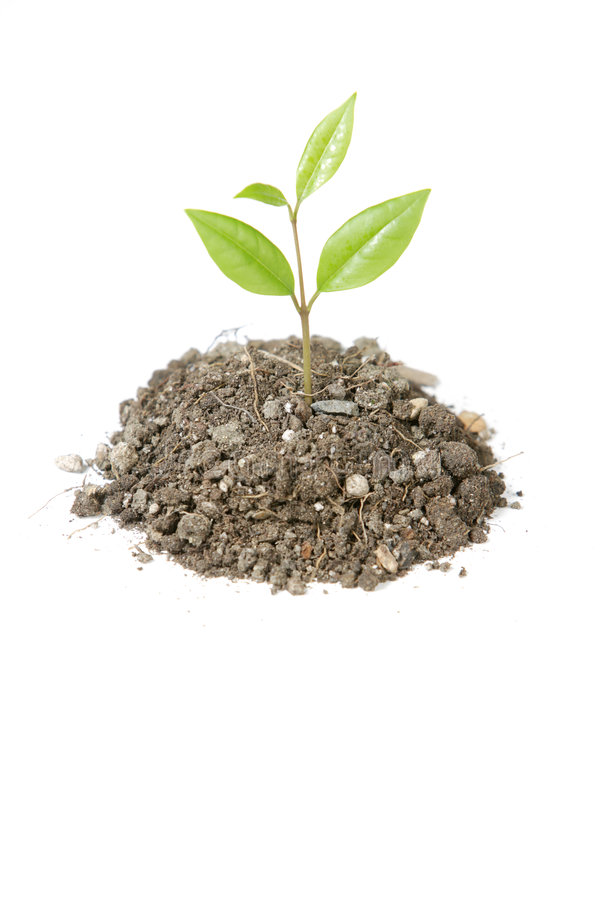 Free Small Plant Stock Images - 4643084