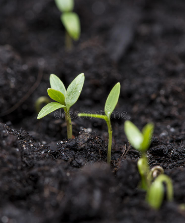 Download Small Plant In Dark Earth Royalty Free Stock Image - Image: 30954686