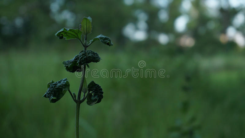 A small plant. stock images