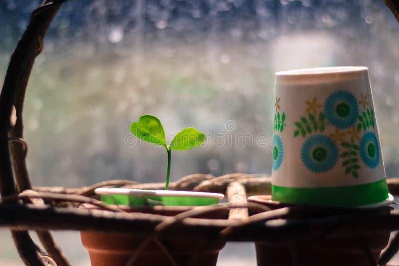 Small plant. stock photos