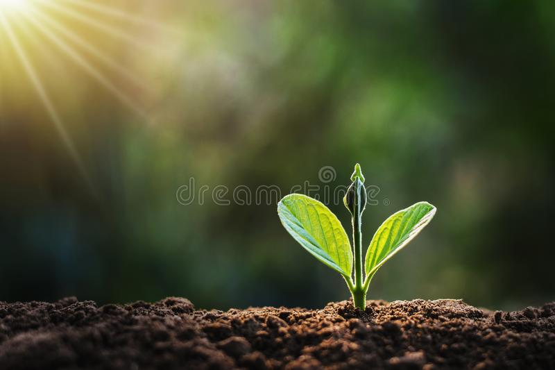 small plant growing in garden stock images