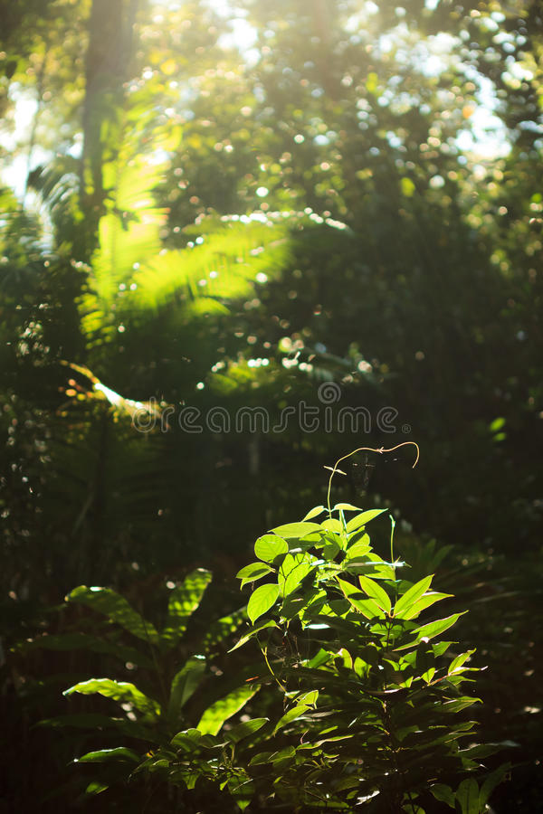 Small plant growing in rainforest royalty free stock images