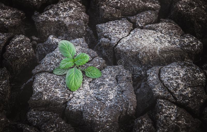 Small plant growing up from cracked and dry mud. Small plant growing from cracked and dry mud in arid environment land in hope concept with outdoor lighting stock images