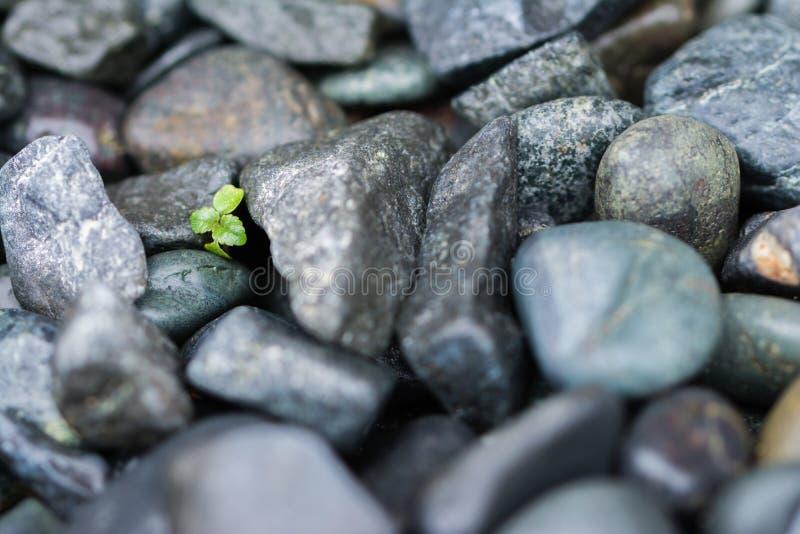 Small Plant Grows Through Big Rocks stock photo