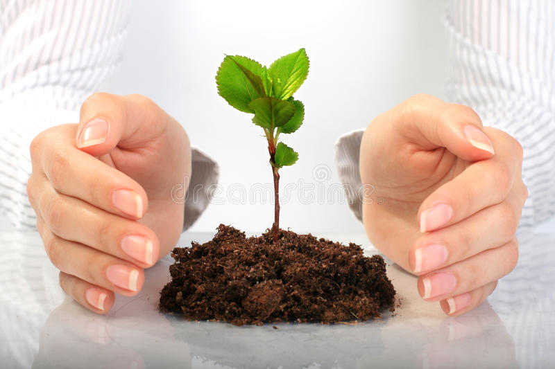Small Plant In Hands. Stock Images
