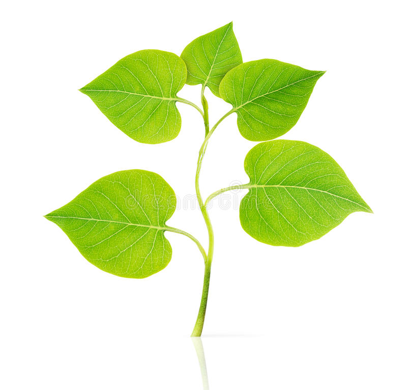 Small plant isolated royalty free stock images