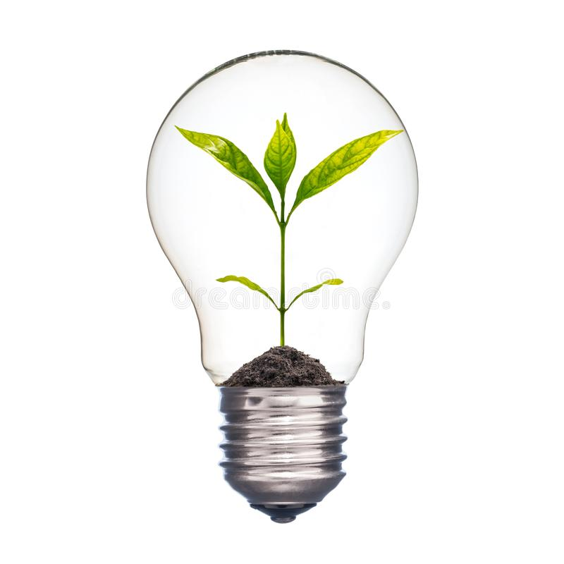 Small plant in a lightbulb royalty free stock image