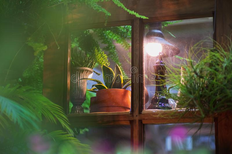 Small plant pots displayed in the vintage window with vintage retro style home garden decoration at night royalty free stock photos