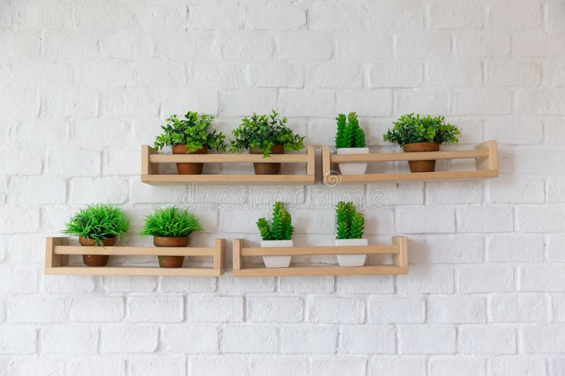 Small plant pots placed on wooden shelf on white birck wall. royalty free stock image