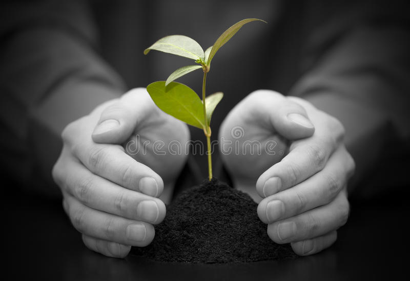 Download Small Plant Protected By Hands Stock Photo - Image: 19302318