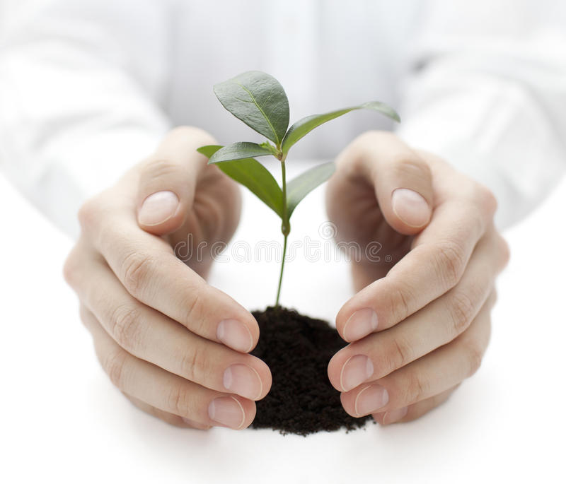Small plant protected by hands