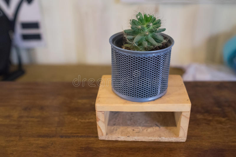 Download Small Plant Stock Image. Image Of Nature, Pots, Potted   73399887