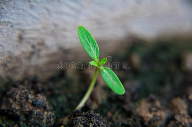 Small plant growing in the garden. Fresh start of the day. Save environment and new transformation life concept stock photos