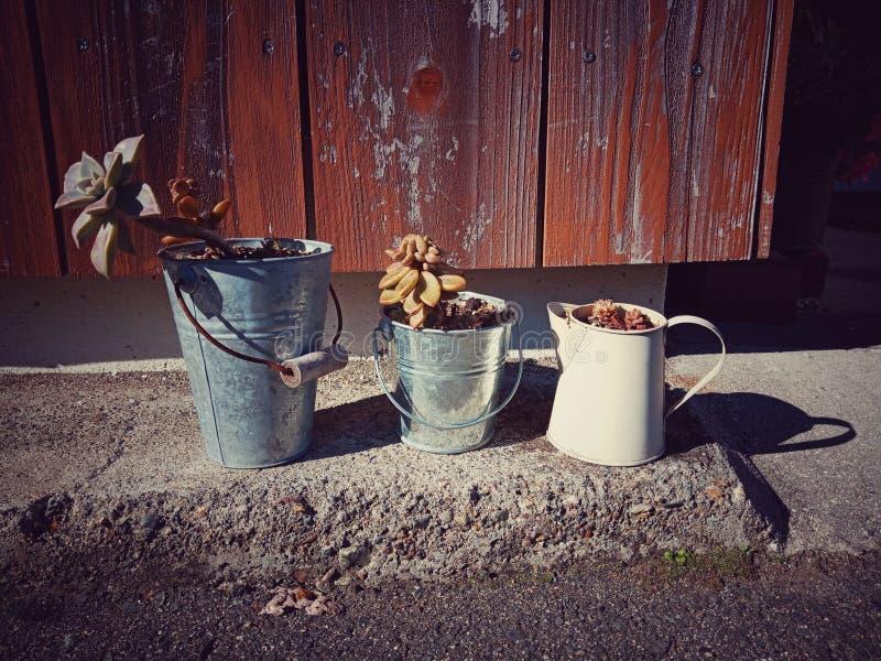 Small Plants in idea pot royalty free stock photo