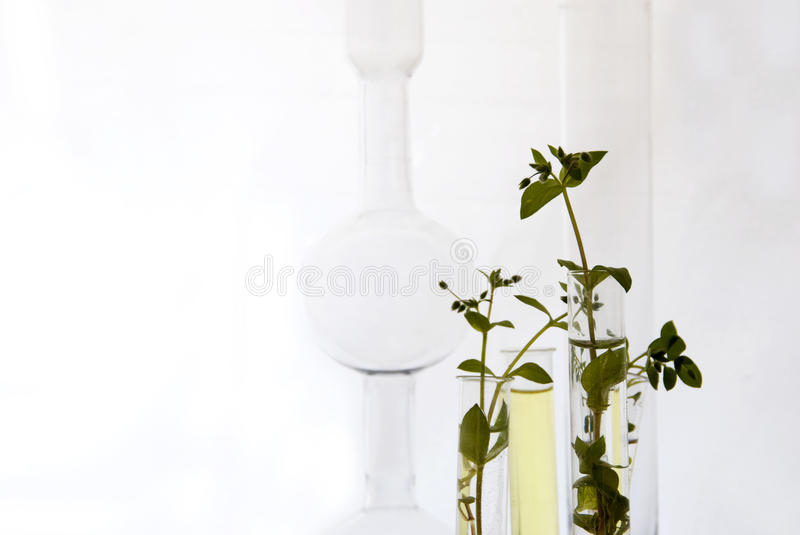 Small plants in test tubes stock images