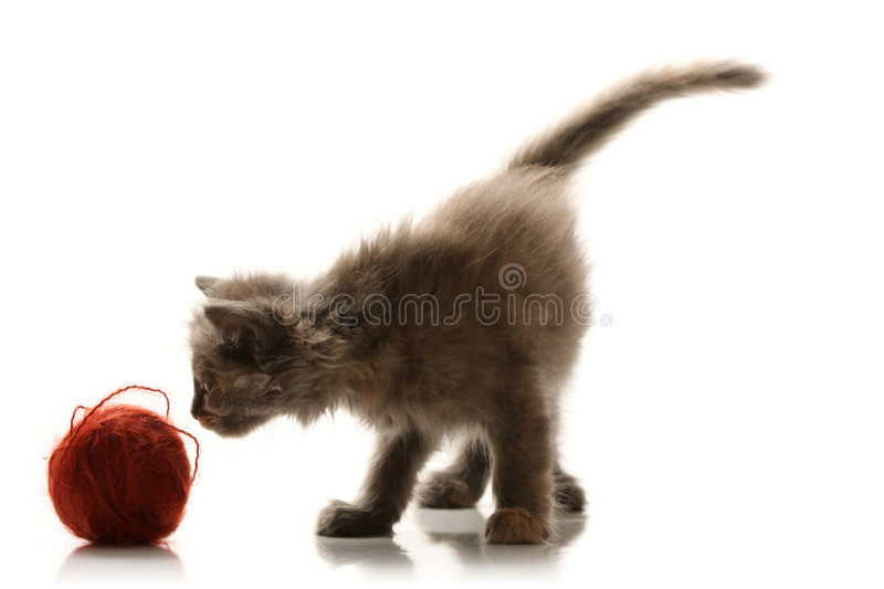 Download Small playful kitty stock photo. Image of portrait, beige - 7241214