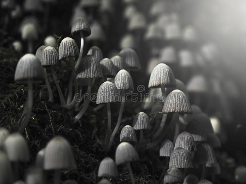 Small poisonous mushrooms toadstool on dark forest stock photos