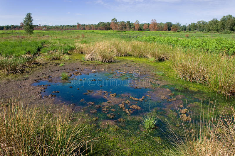 Small pond stock image