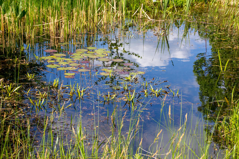 Small pond aquatic plants. Small pond and aquatic plants in botanic garden stock photo