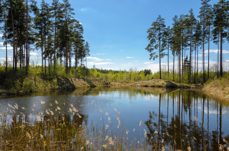 A small pond. royalty free stock image
