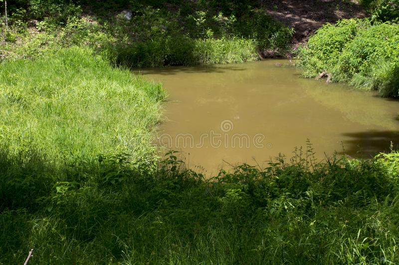 Small pond in a meadow royalty free stock photography