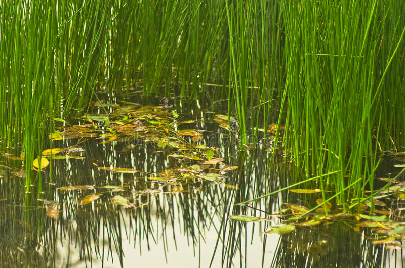 Small Pond On A Trekking Path At Rural Countryside Of ...