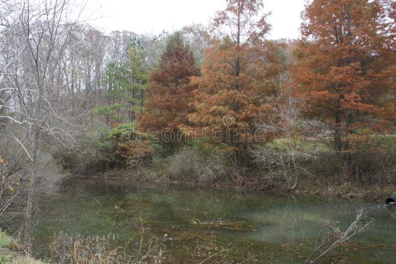 Late fall pond scene. A small pond in the late fall with hemlock trees, needles turning brown, and bare trees surrounding the water stock photos