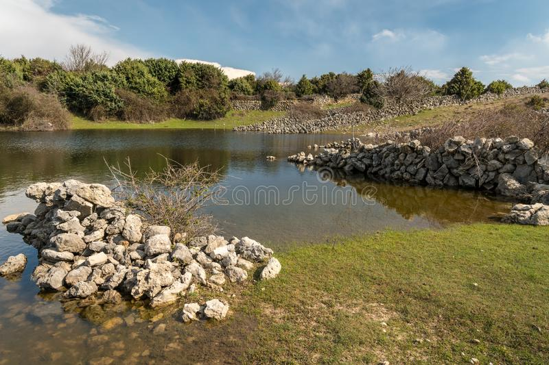 Small pond, watering place for sheep in spring royalty free stock photos