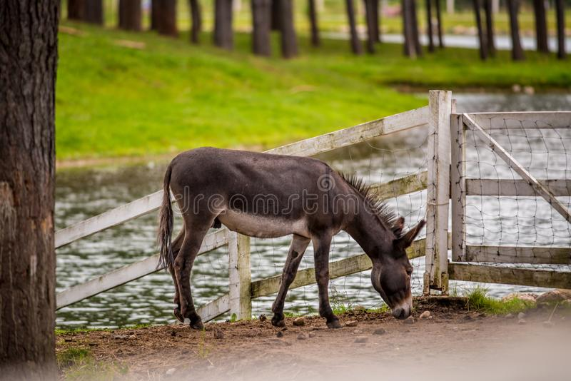Small pony horse in a farm near water stock photos
