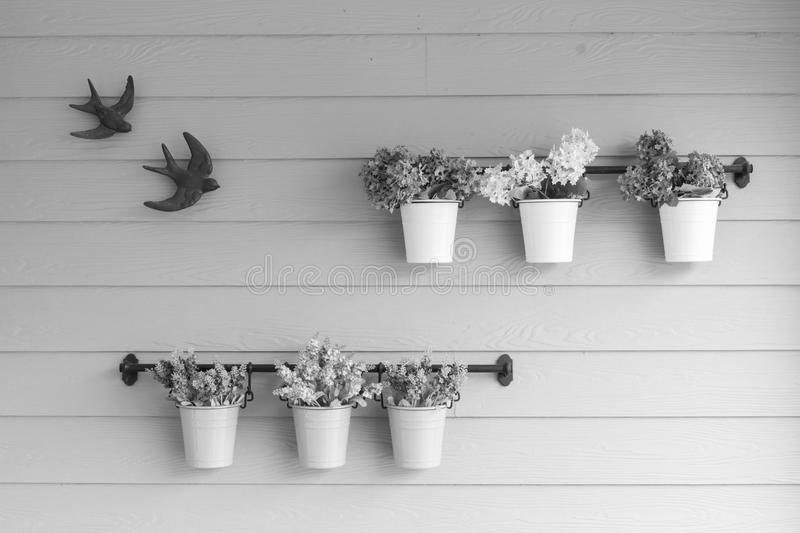 Small pot flower on board wooden wall. stock photo