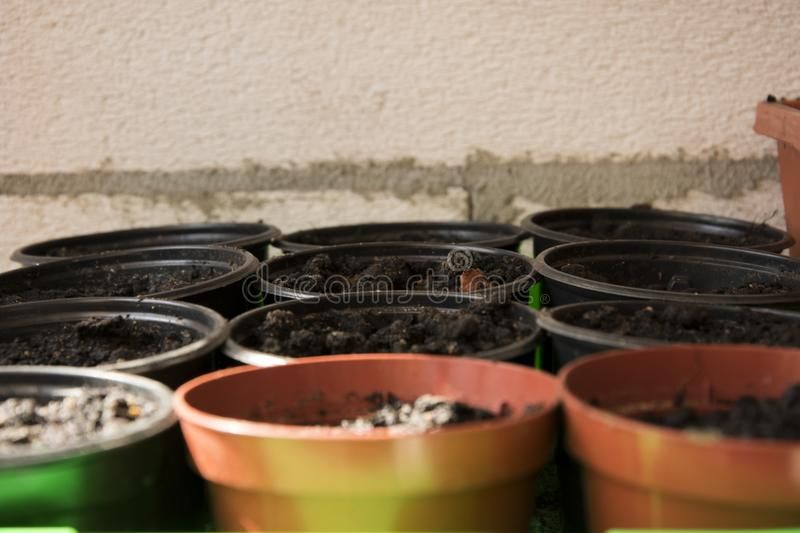 Small pots with the ground under the seedlings royalty free stock photos