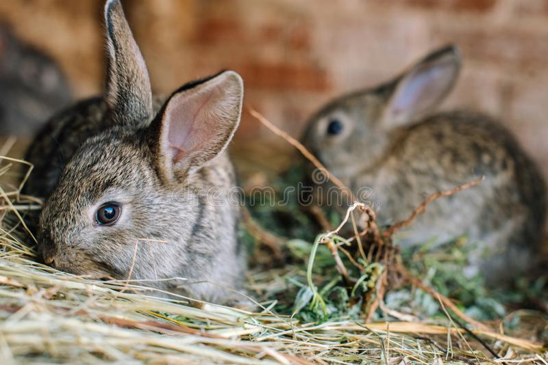 A small pretty rabbit is sitting in a cage and sniffing hay. royalty free stock photos