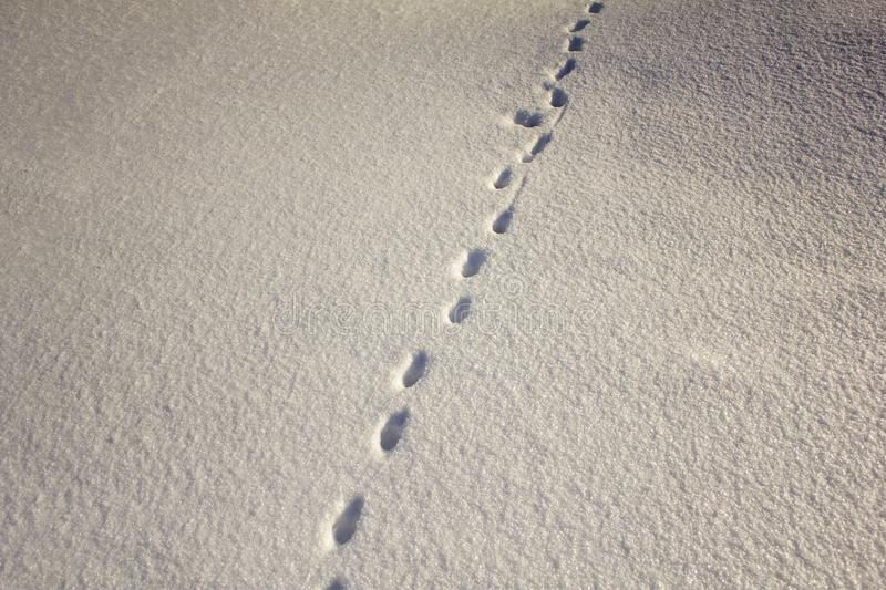Small prints of wild animal tracks on white snow in winter stock photos