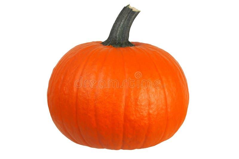 Pumpkin on white royalty free stock photos