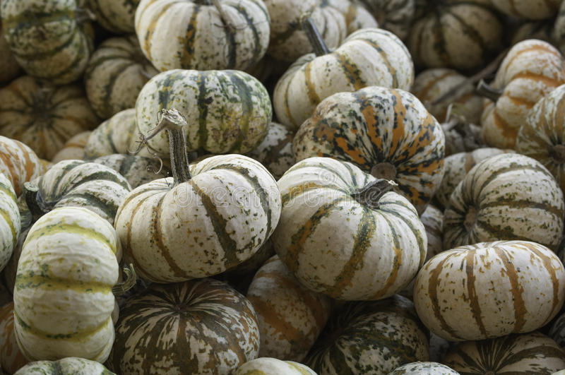 Small Pumpkins royalty free stock images