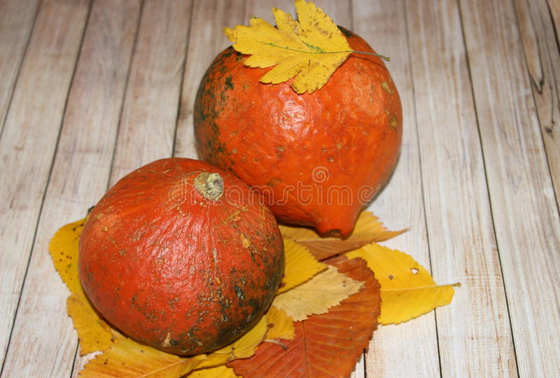 Small pumpkins royalty free stock photo