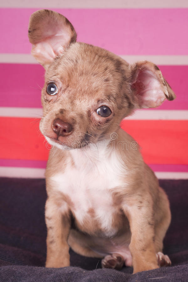 Small puppy dog stock photography