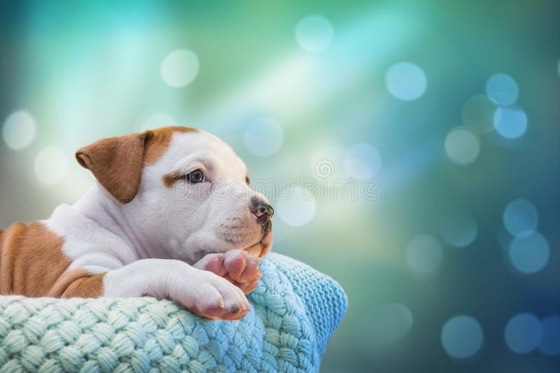 Small puppy inbasket. Buying a dog. National pet`s day. To love animals. royalty free stock image