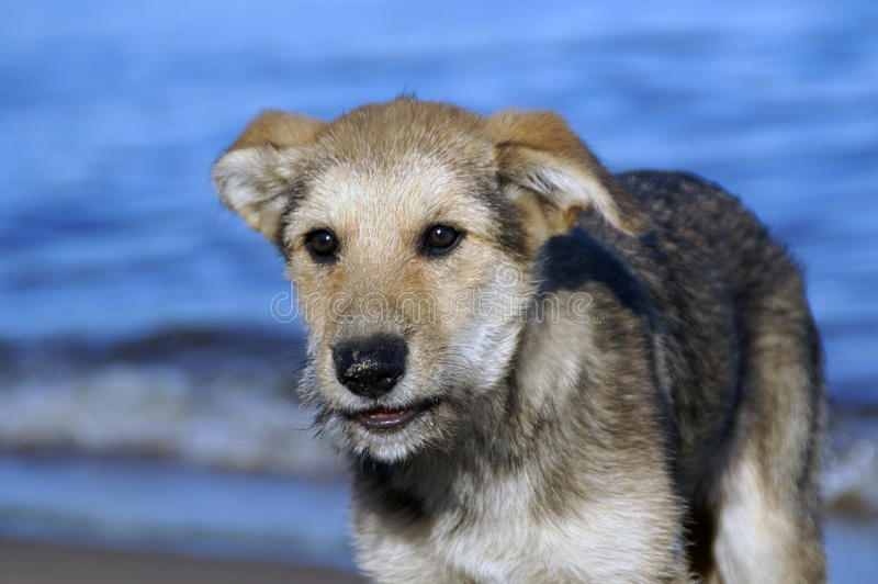 Download Small puppy on a lake stock photo. Image of small, fluffy - 26501988