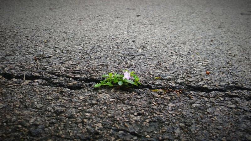 Flower growing through cracks stock photography