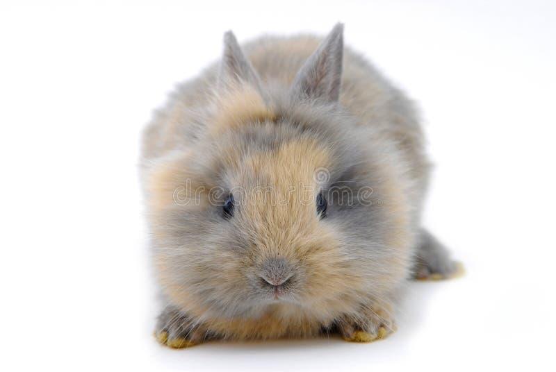 Small rabbit stock image