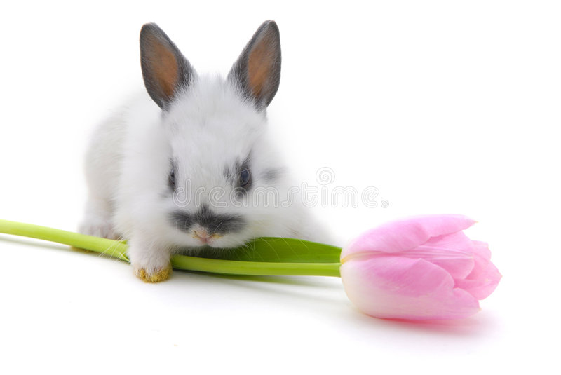Small rabbit and flower. Isolated on white background