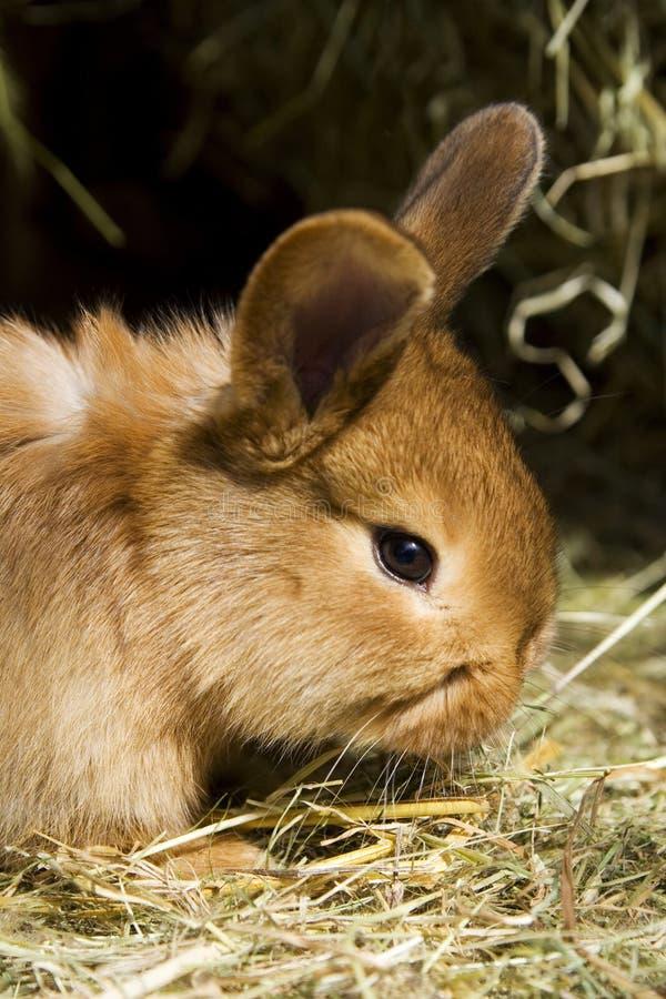 Small rabbits royalty free stock photo