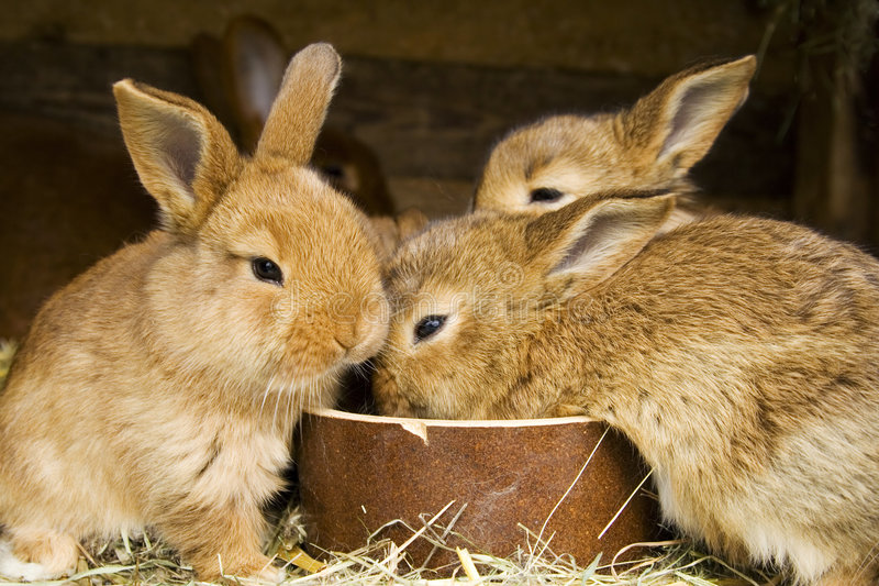 Small rabbits stock photography